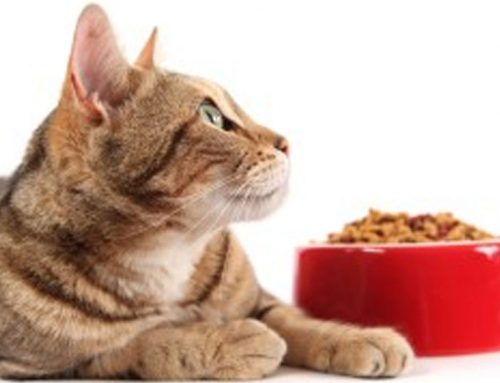 FOOD ALLERGIES AND YOUR PET