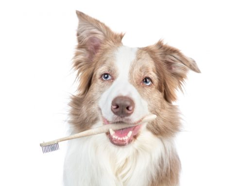 Dental Season at Newport Hills Animal Hospital